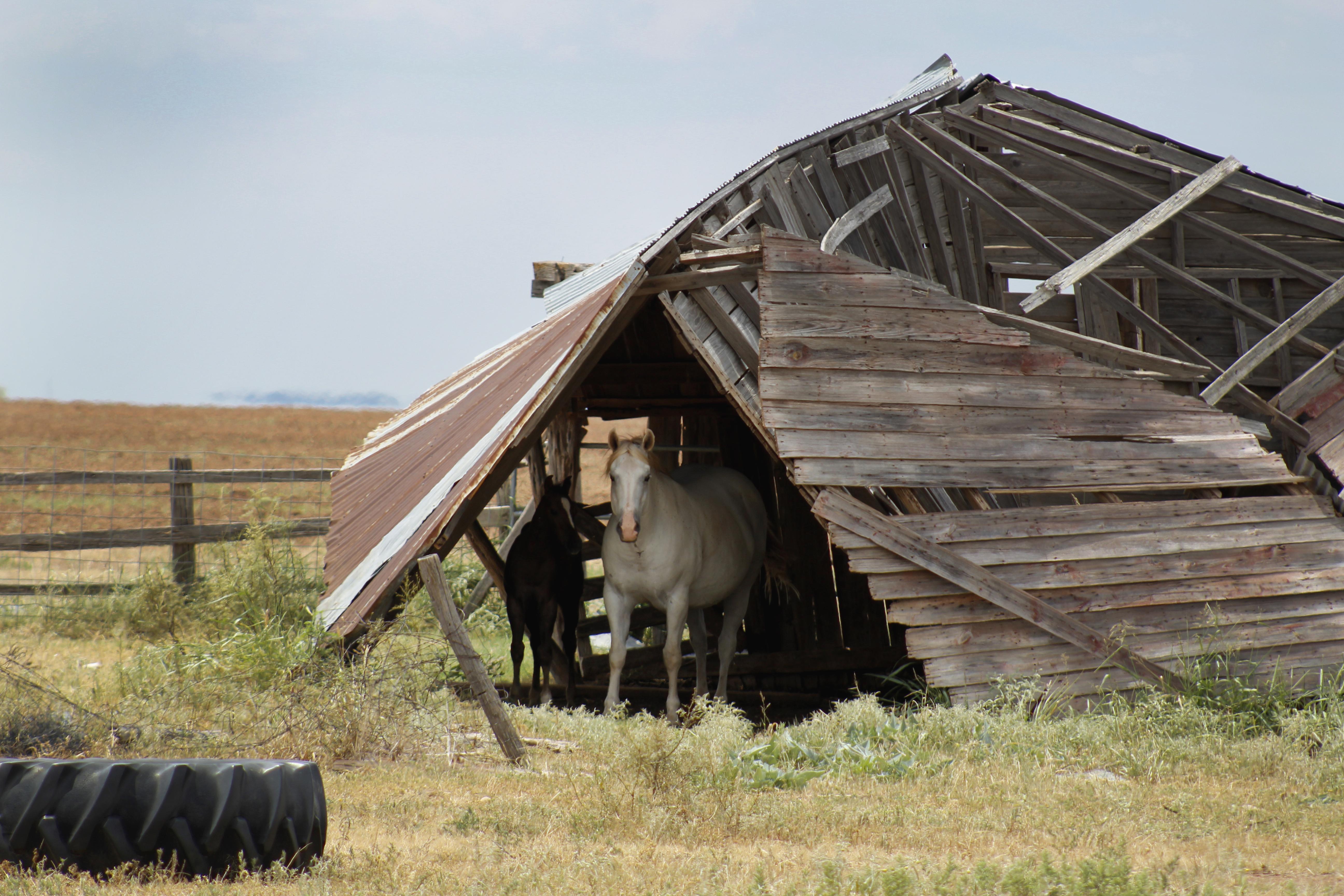 horses, medicine mound